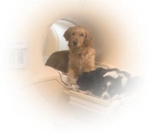 DogsfMRI