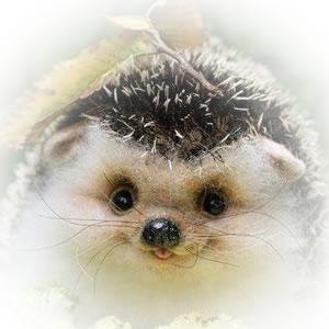 0003-Hedgehog