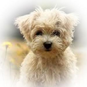 0004-Puppy
