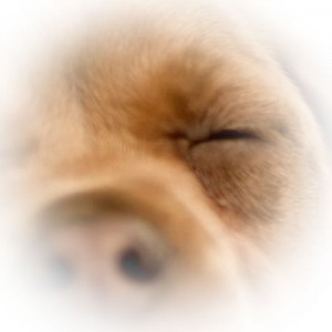 DogEye2