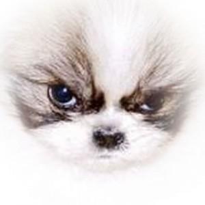 DogFace2