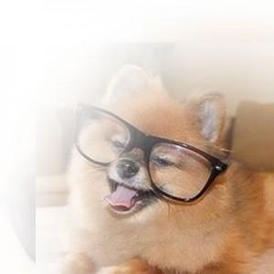 DogFace4