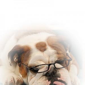 DogFace5