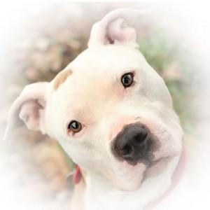 DogFace6