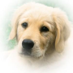 DogLab1