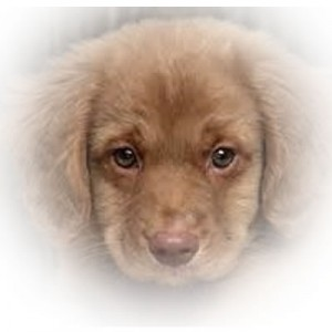 PuppyFood