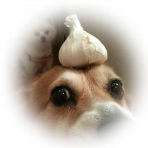GarlicDog