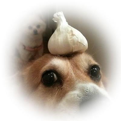 Garlic Pills For Dogs Fleas