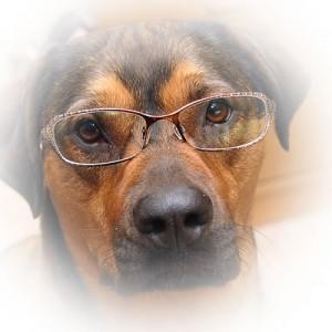 DogFace3