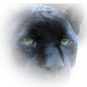 0010-Panther