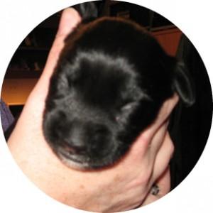 0011-Puppy