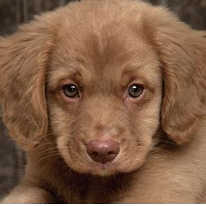 0014-Puppy