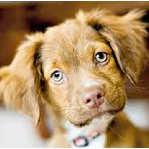 0016-Puppy