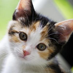 0019-Cat
