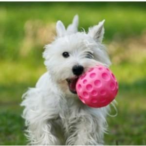 0022-Puppy