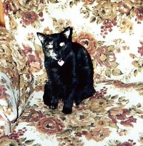 2003-05-Sequin-01