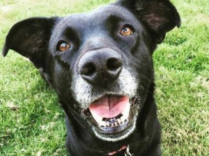 maggie-foster-hospice-care